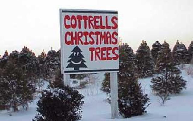 Cottrell's Christmas Tree Farm