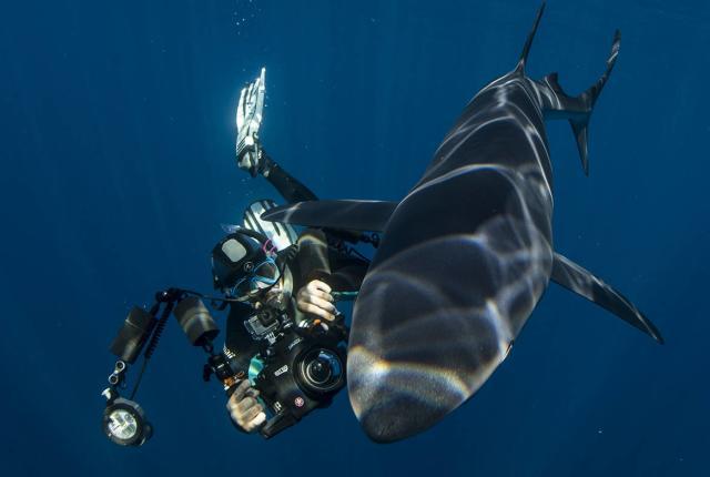 cabo shark