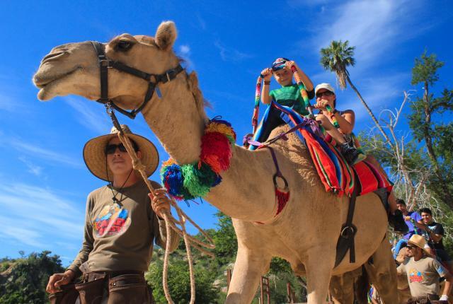 camel ride tours