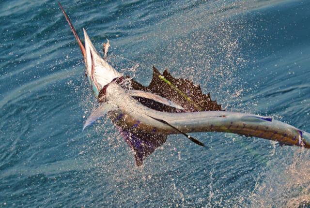 sportfishin