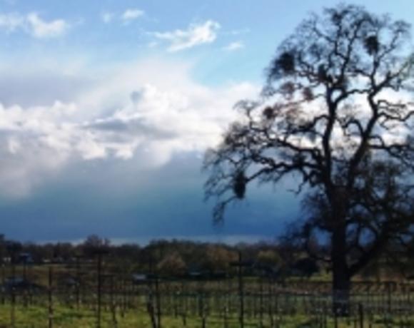 Amador County Vintners Association