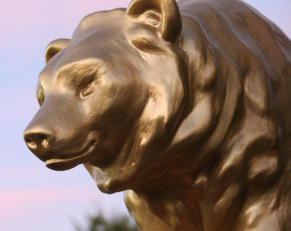 Cal Expo Bear