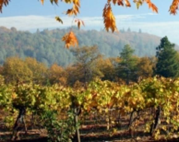 El Dorado Winery Association