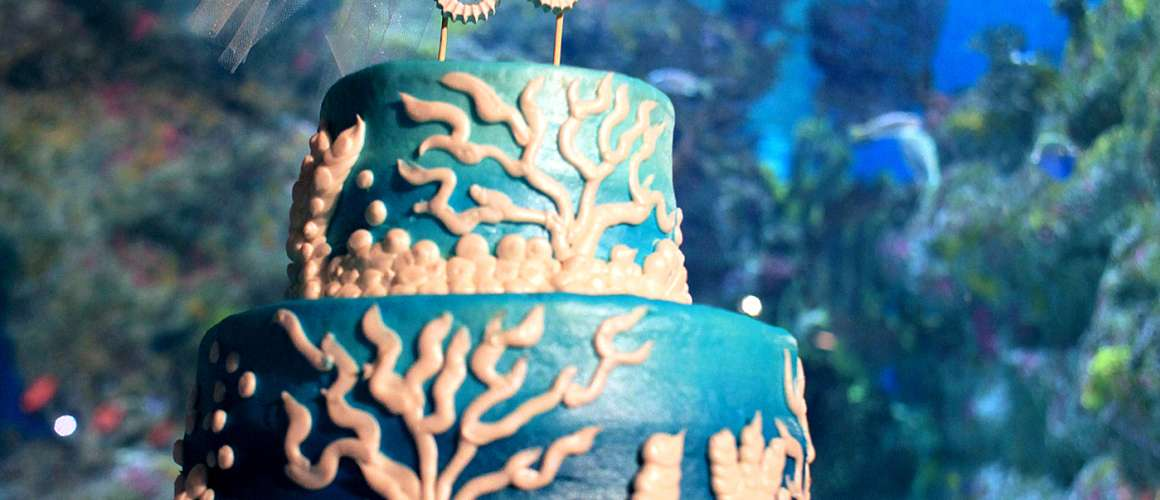 Wedding cake at the Aquarium