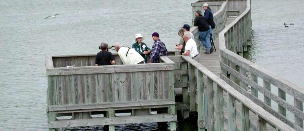 Birding on the Boardwalk
