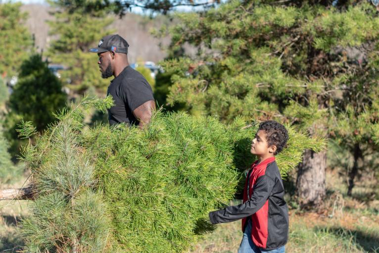 Erins farm trees