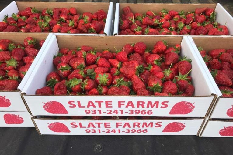 Slate Strawberry Farm