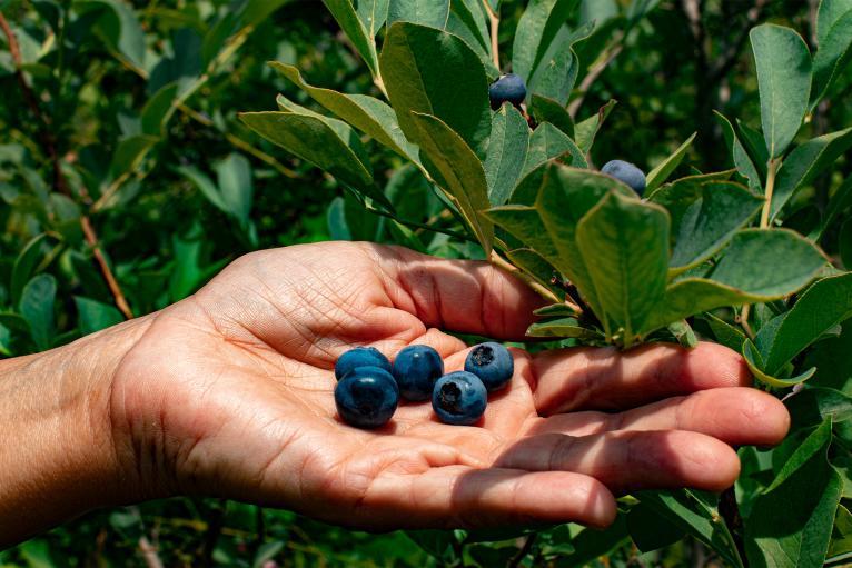 Erin's Blueberries