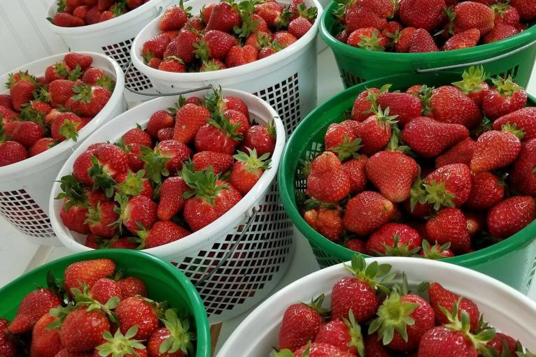 McCraw's Strawberry Ranch