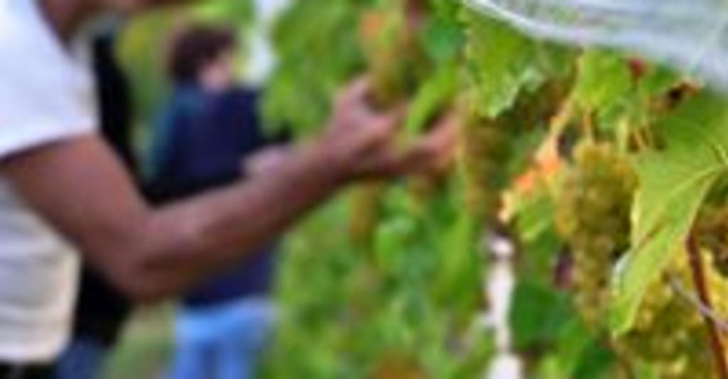 Damiani_Wine_Cellars_Vineyards
