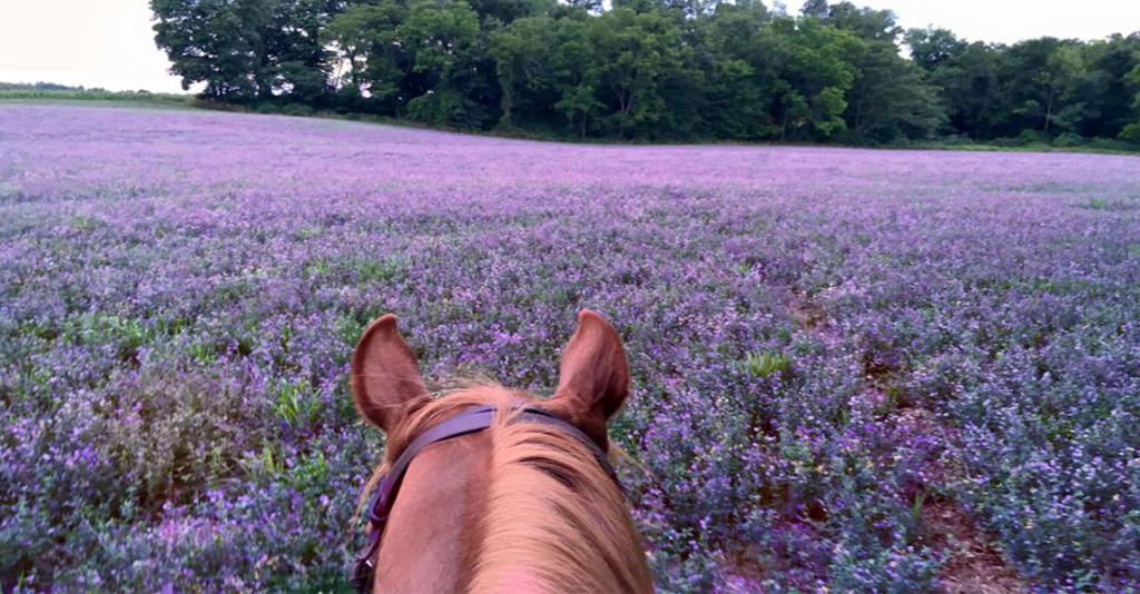 Painted Bar Stables - Trail Ride View