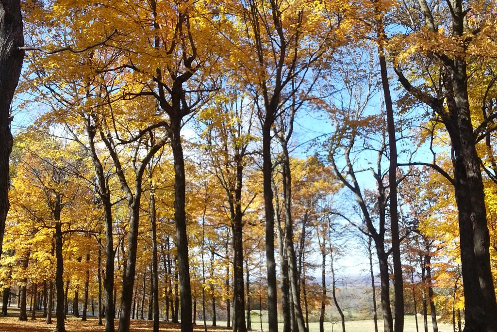 Brigham County Park