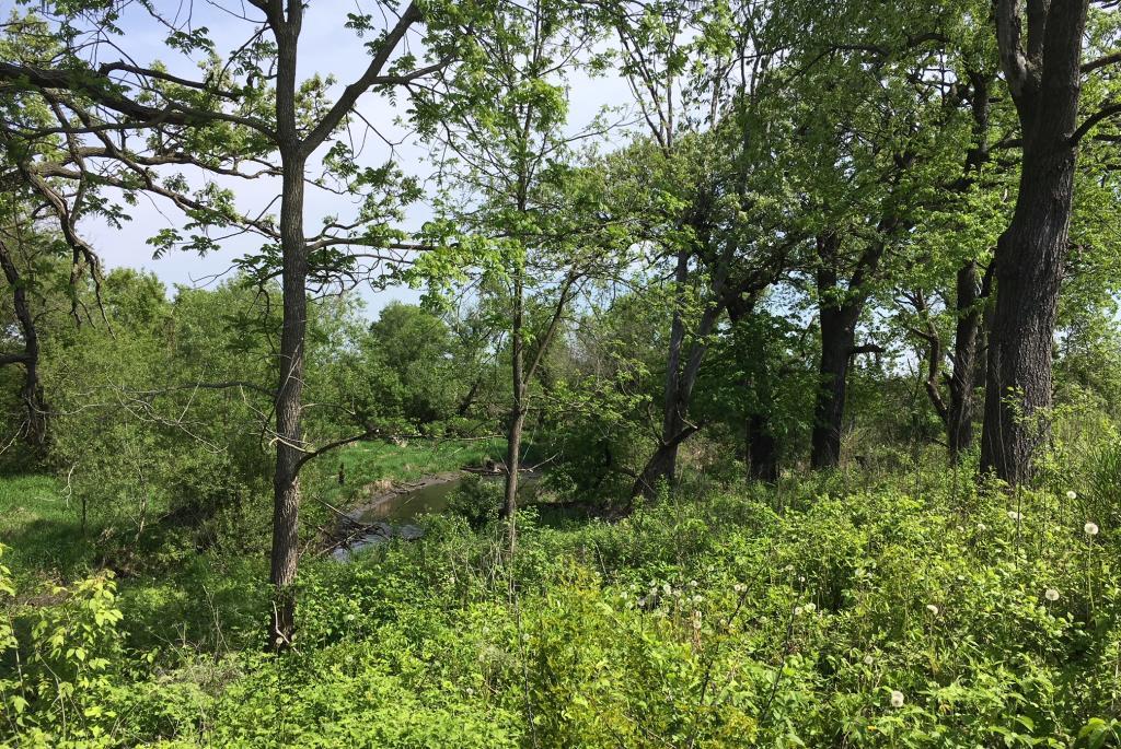 Cherokee Marsh WA