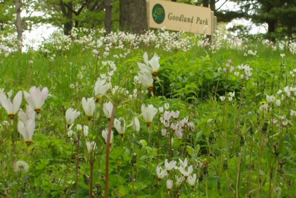 Goodland Park 1