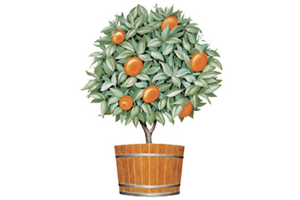 Orange Tree Imports