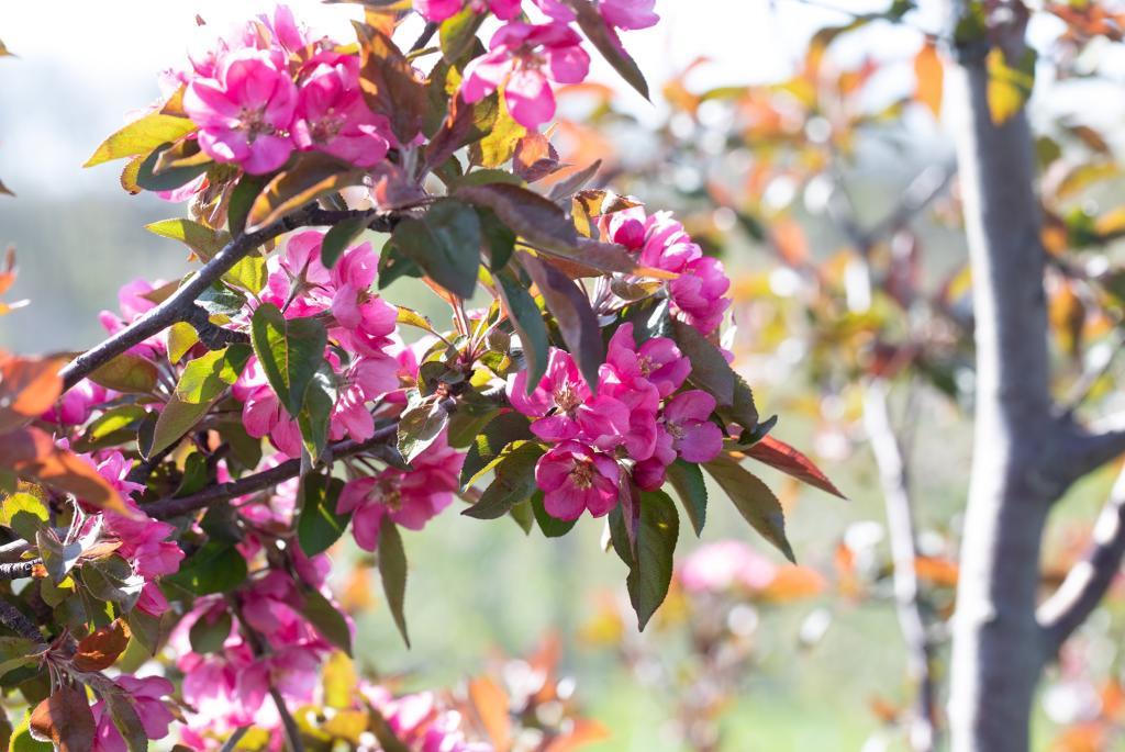 cider-farm-flowers