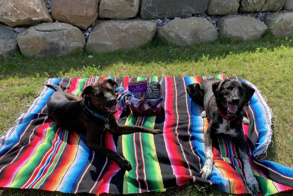 pet-picnic-pack