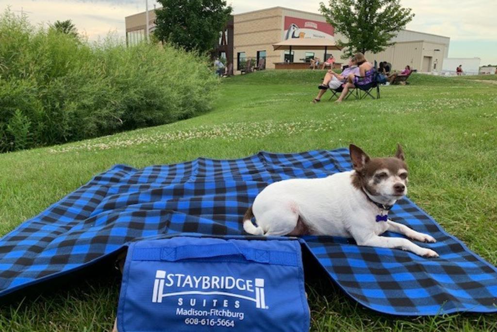 staybridge-picnic