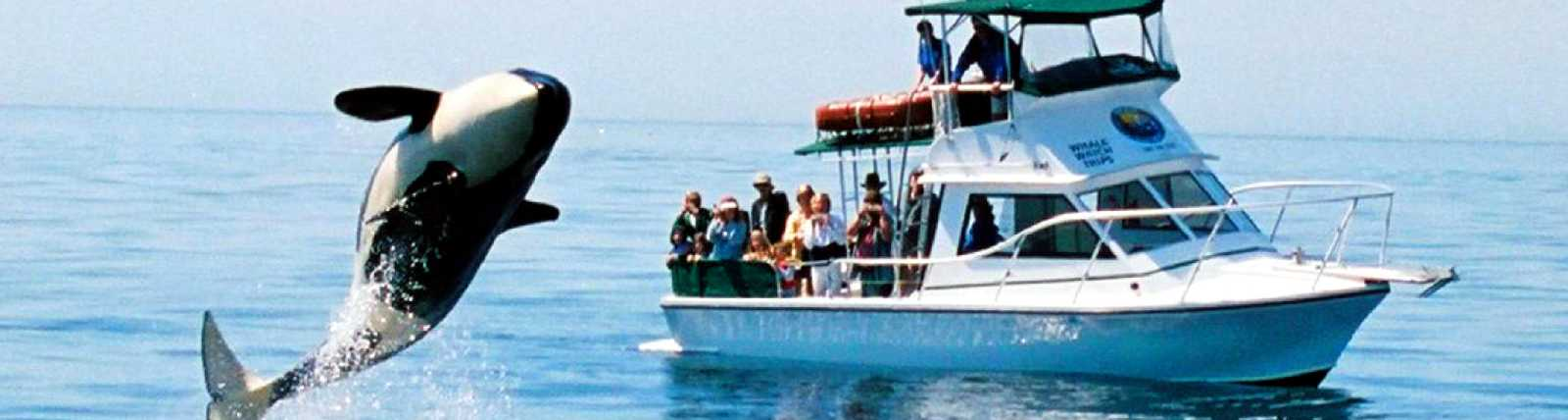 San_Juan_Safaris_Whale_Watching.jpg