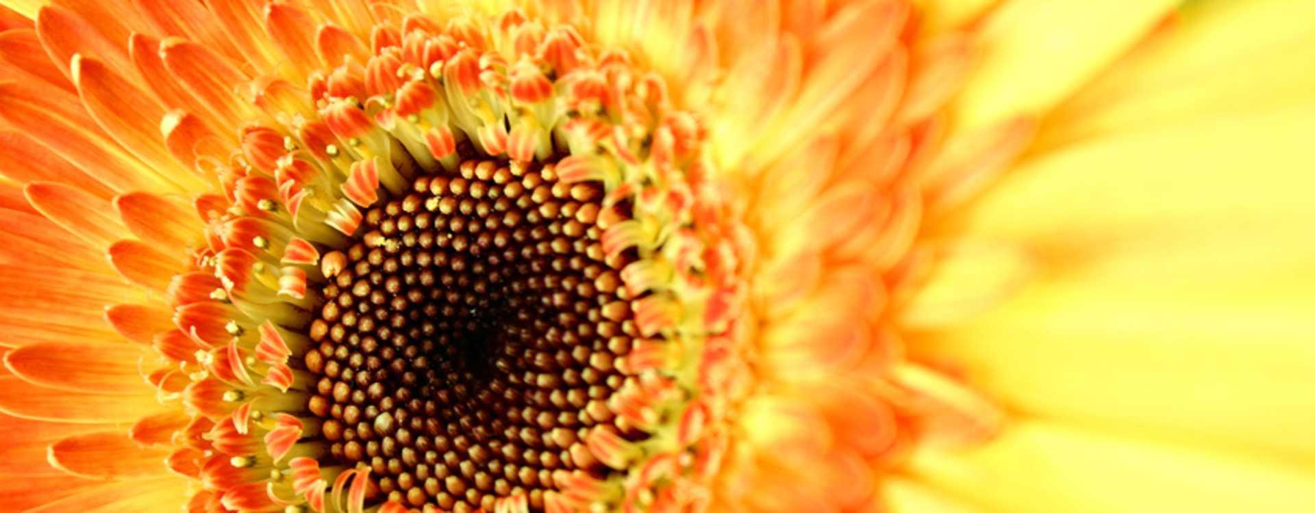 Fran_s_Flowers.jpg