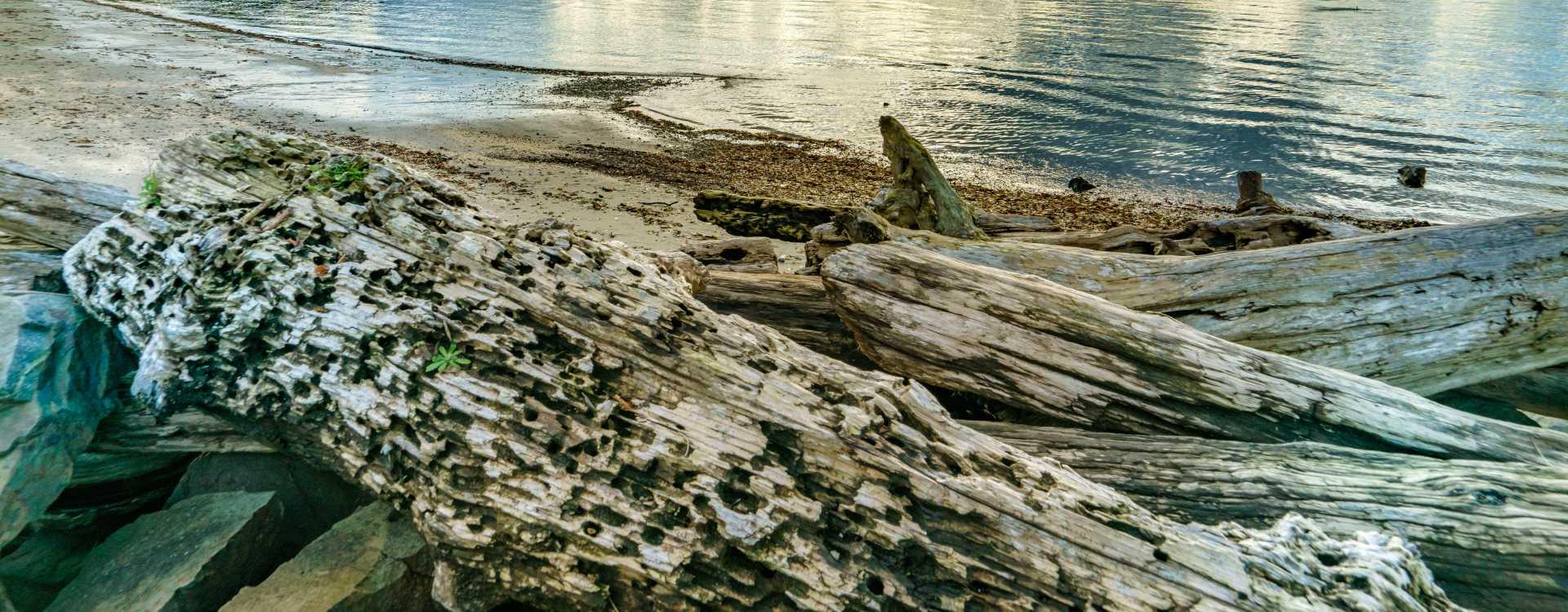 Saltwater-State-Park