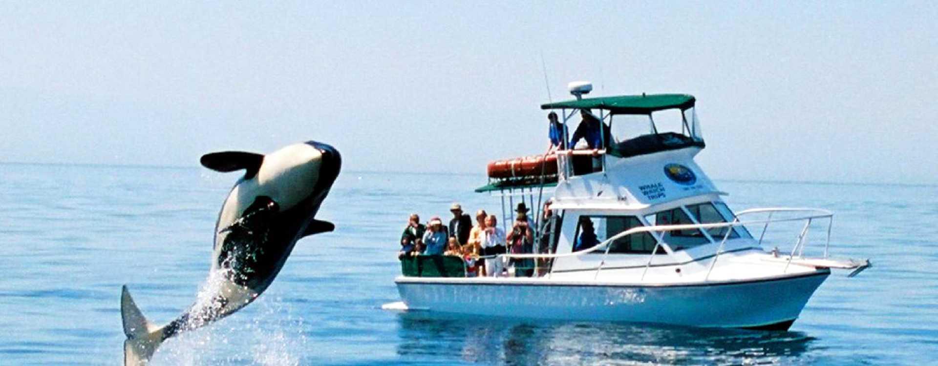 San_Juan_Safaris_Whale_Watching.jpg