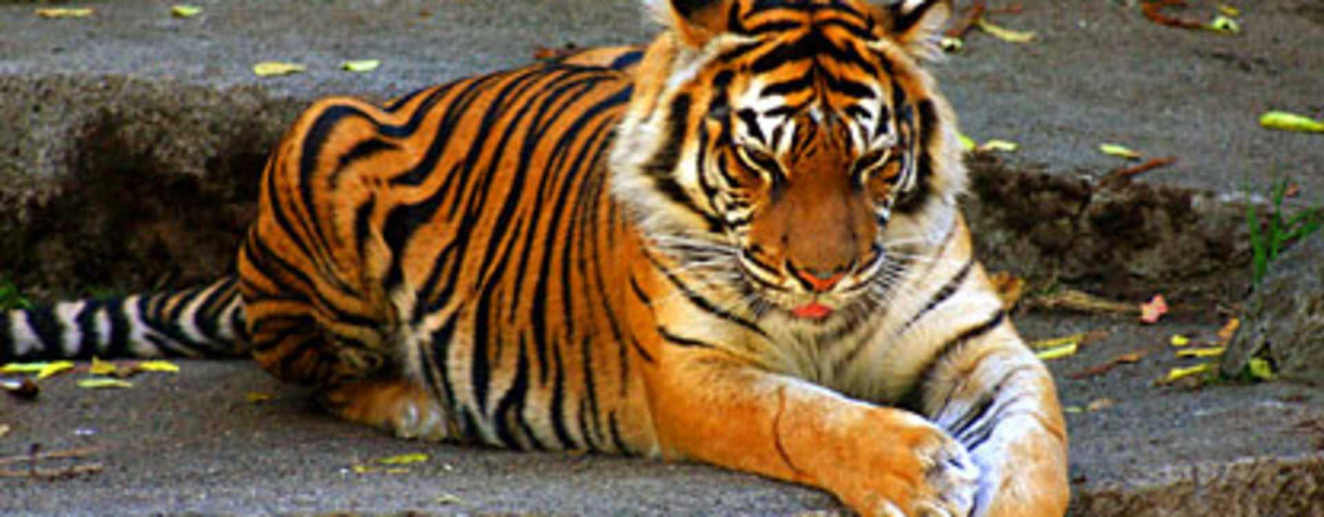 Woodland_Park_Zoo.jpg
