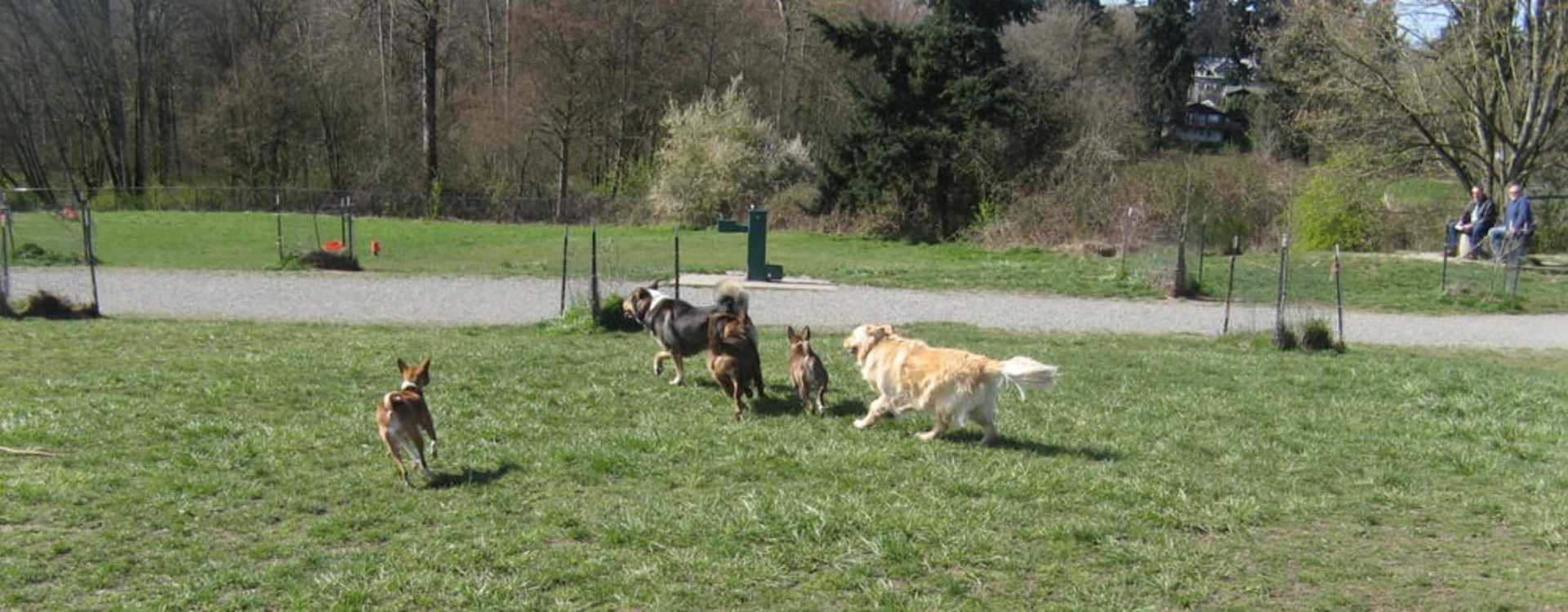 Grandview Off-Leash Dog Park