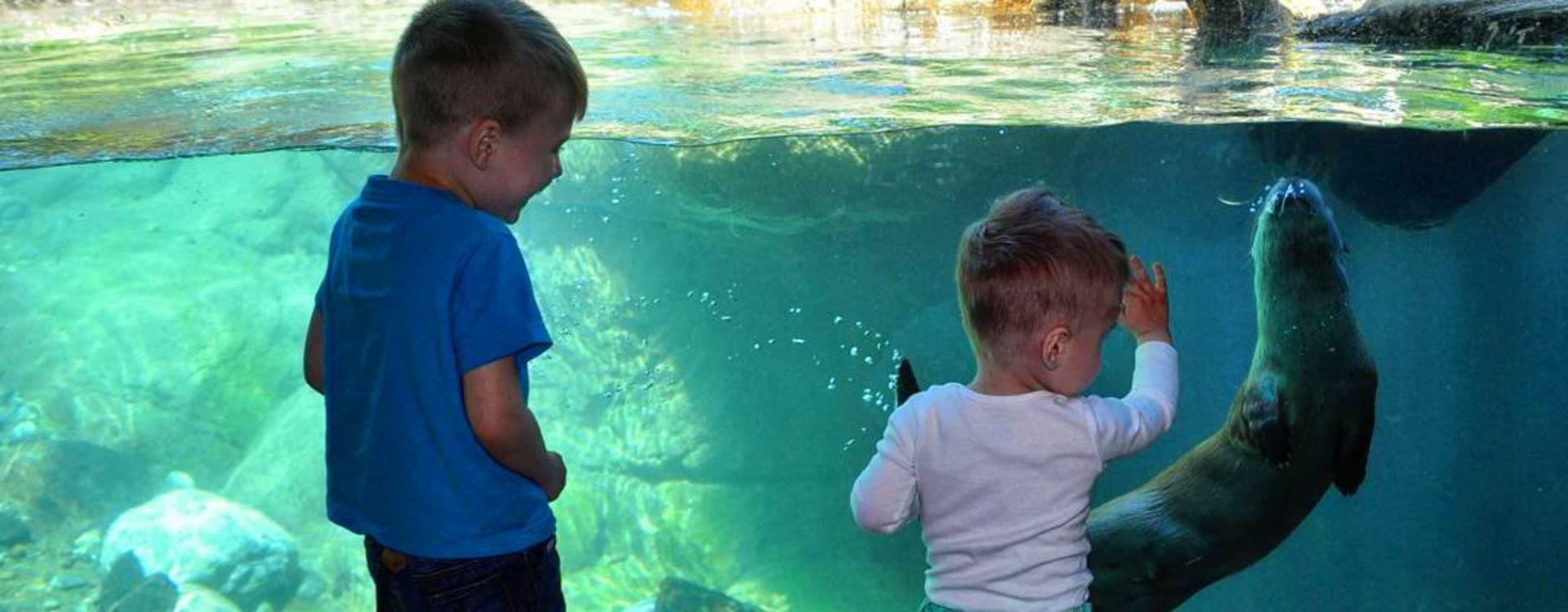 Boys play with Otter at Woodland Park Zoo in Seattle