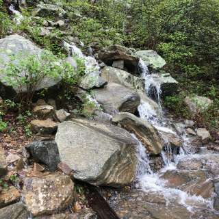 Naturalist Niche: Watershed Hike
