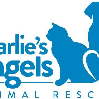 Power in Pints Brewing Highlighting Charlie's Angels Animal Rescue