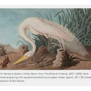 Audubon's Legacy: Artist, Scientist, Writer, and Conservationist