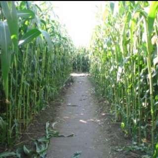 2021 Annual Eliada Corn Maze