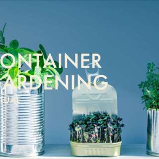 Chow Chow Virtual Series: Container Gardening