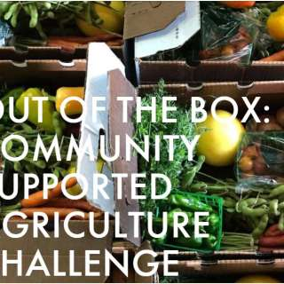 Chow Chow: Out of the Box: Community Supported Agriculture Challenge