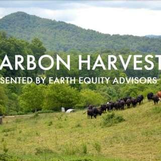Chow Chow: Carbon Harvest
