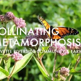 Chow Chow: Pollinating Metamorphosis