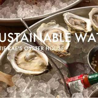 Chow Chow: Sustainable Waters (11:00 AM-1:00 PM)