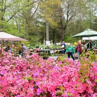 Bullington Gardens Spring Plant Sale