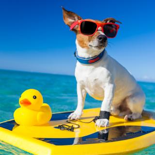 Dog Days of Summer Pool Pawty