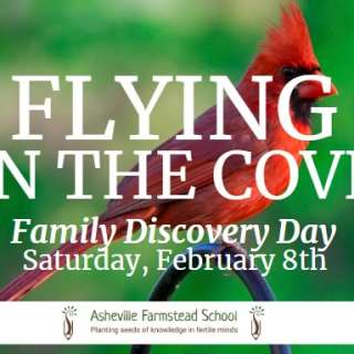Family Discovery Day - Flying Friends in the Cove