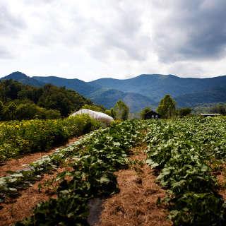 VIRTUAL: Farm Dreams