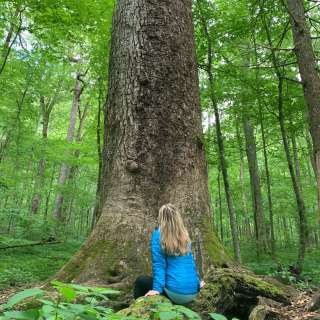 $5 OFF Forest Bathing & Nature Therapy