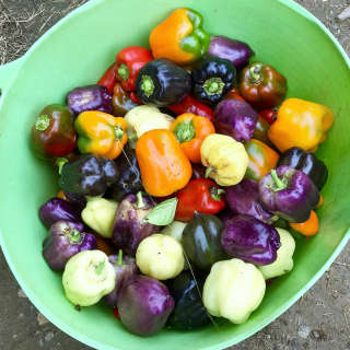 Intro to the anti inflammatory diet