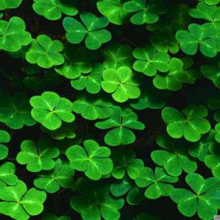 Luck o' the Irish at the WNC Farmers Market