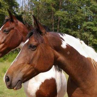 Horseback Riding | Asheville, NC's Official Travel Site