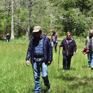 Forest Bathing & Nature Therapy Walk