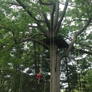 Adventure Center of Asheville- TreeQuest- Tree Climbing Open Climbs