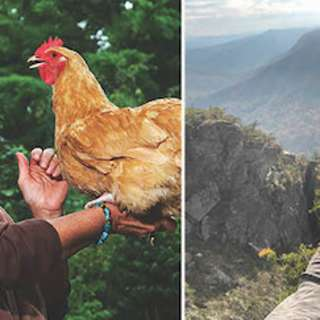 Chickens & You: From Egg to Table with Pat Foreman & Meagan Coneybear