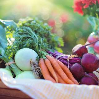 Vegetable Gardening Basics 2020